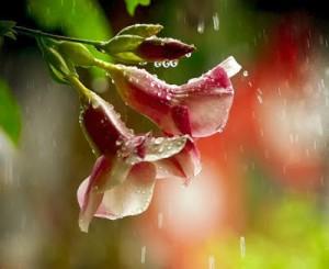 flor-hermosa-flowers